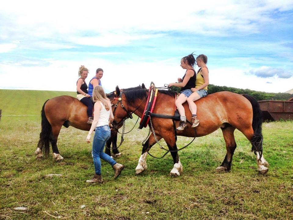 horse-logging4