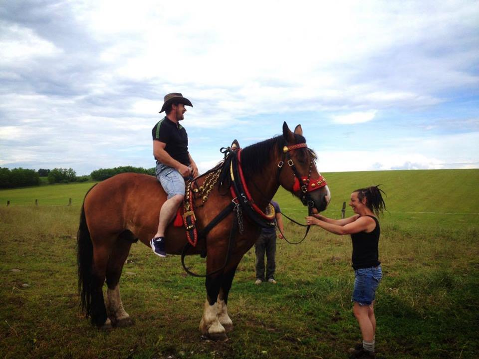 Horse Loging3